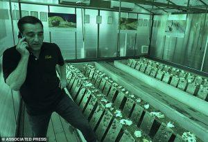 Snail facial farm